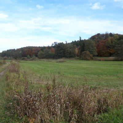 Landwirtschaftliche Wiesenfläche